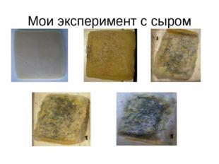 Мои эксперимент с сыром