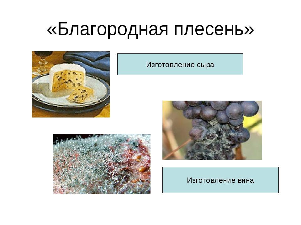 «Благородная плесень» Изготовление сыра Изготовление вина