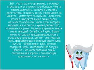 Зуб - часть целого организма, это живая структура, и он значительно больше, ч