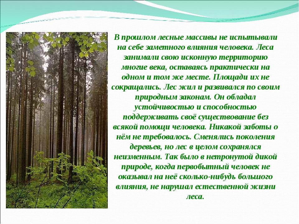 В прошлом лесные массивы не испытывали на себе заметного влияния человека. Л...