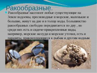 Ракообразные. Ракообразные населяют любые существующие на Земле водоемы, прес