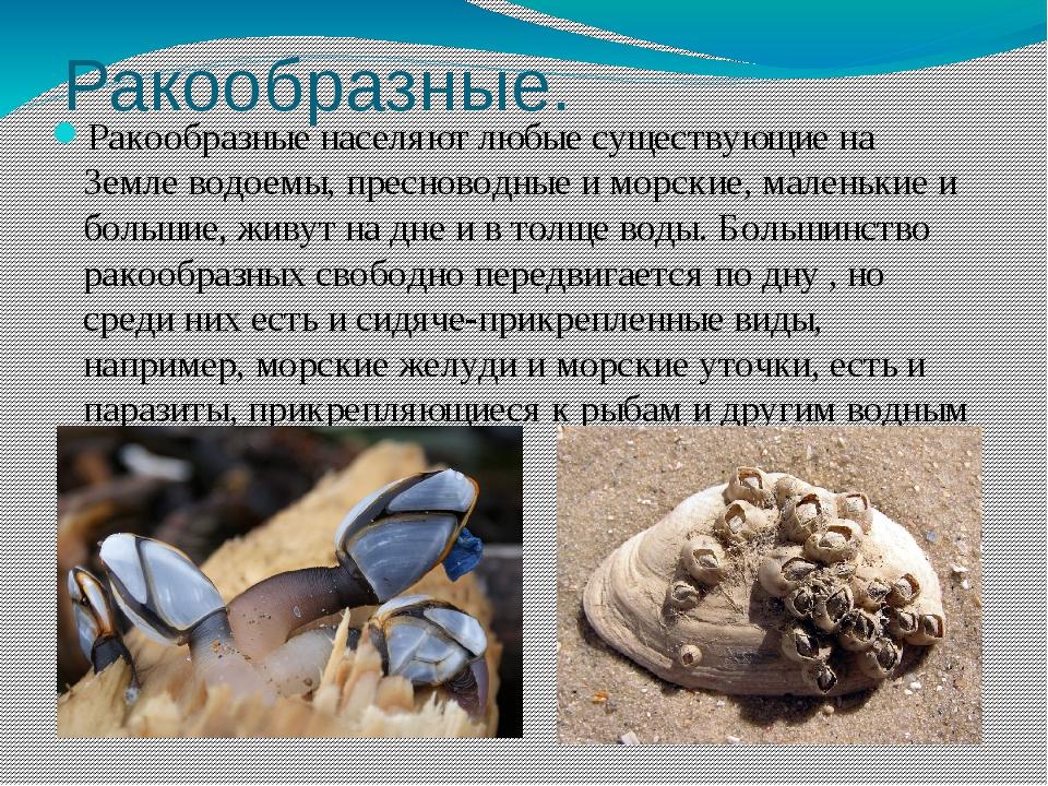 Ракообразные. Ракообразные населяют любые существующие на Земле водоемы, прес...