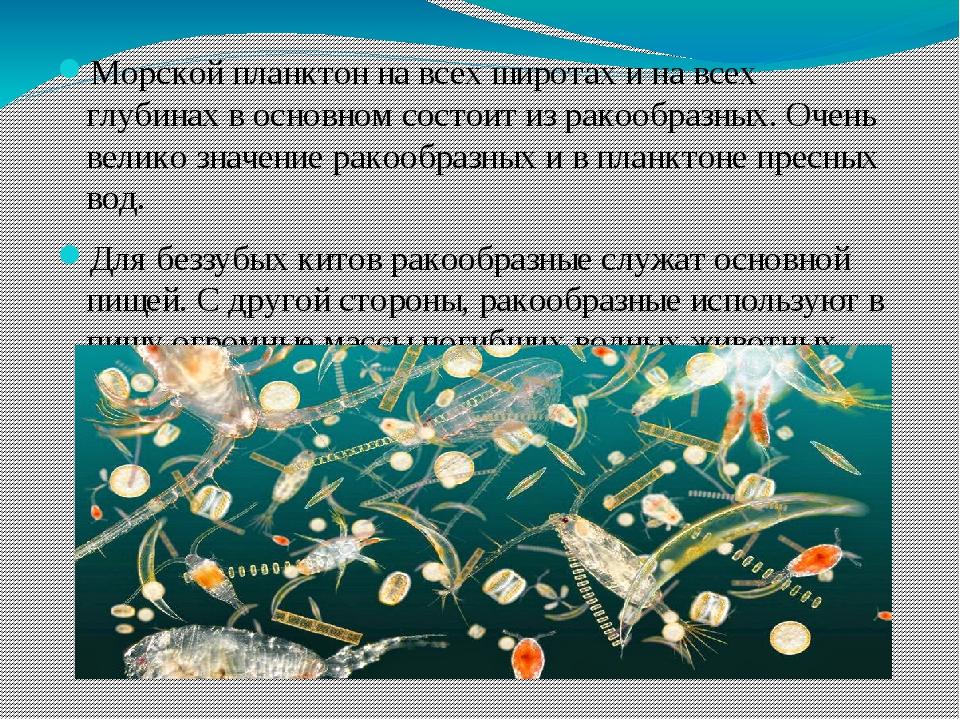Морской планктон на всех широтах и на всех глубинах в основном состоит из ра...