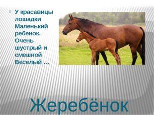 Жеребёнок У красавицы лошадки Маленький ребенок. Очень шустрый и смешной Весе