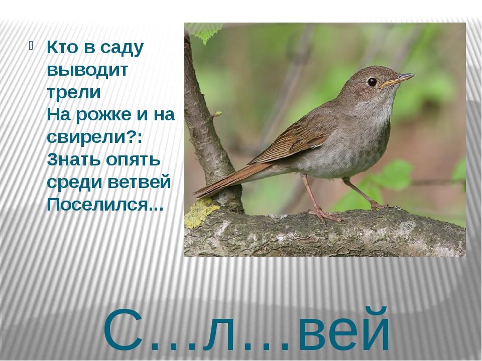 С…л…вей Кто в саду выводит трели На рожке и на свирели?: Знать опять среди ве...