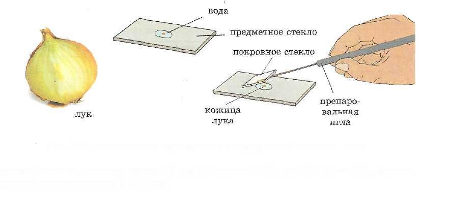 hello_html_34d948b6.jpg