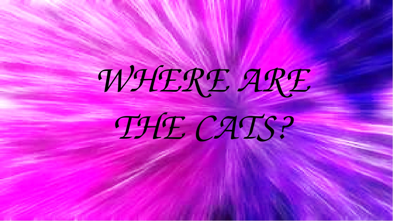 WHERE ARE THE CATS?