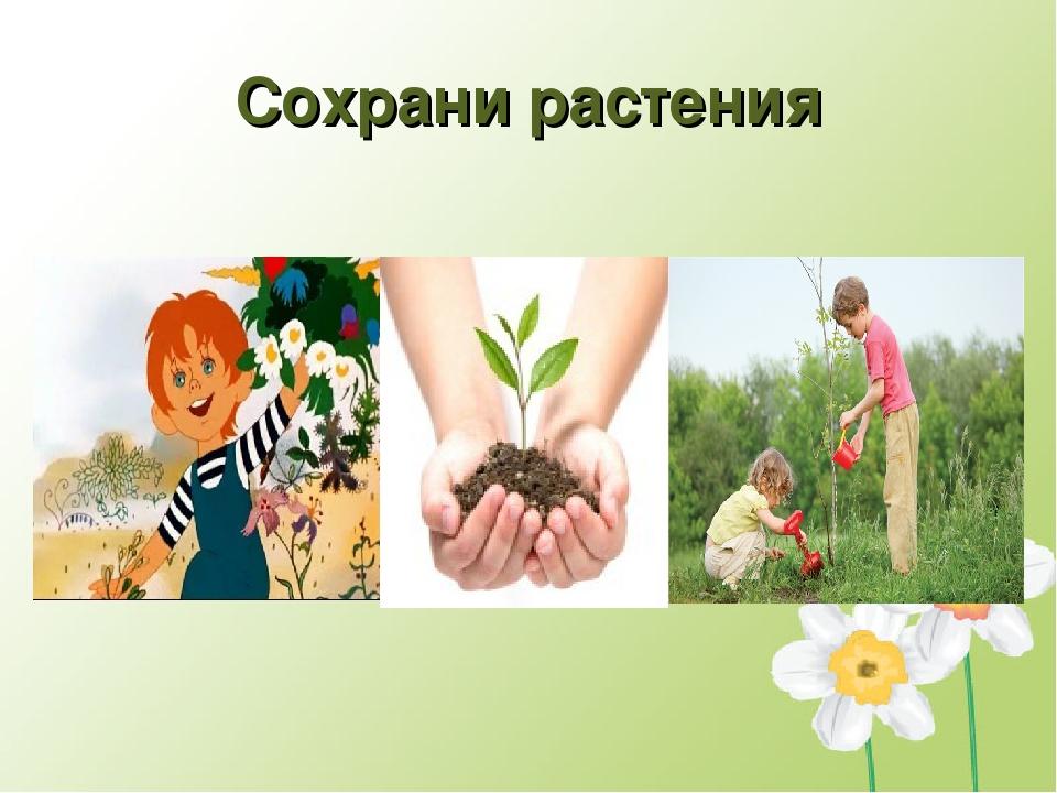 Сохрани растения