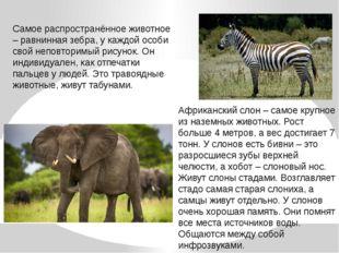 Самое распространённое животное – равнинная зебра, у каждой особи свой неповт