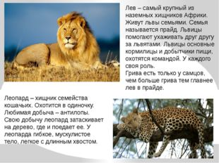 Лев – самый крупный из наземных хищников Африки. Живут львы семьями. Семья на