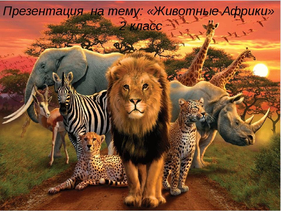 Презентация на тему: «Животные Африки» 2 класс