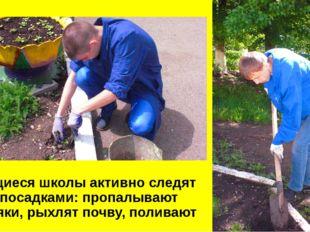 Учащиеся школы активно следят за посадками: пропалывают сорняки, рыхлят почв