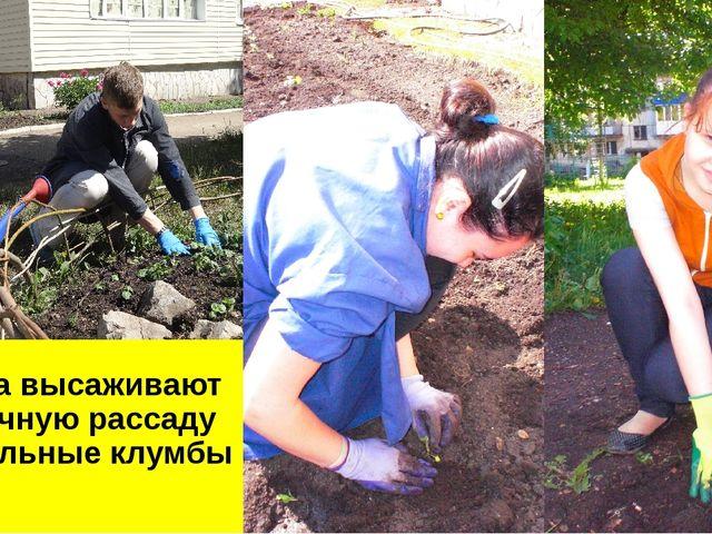 Ребята высаживают цветочную рассаду на школьные клумбы