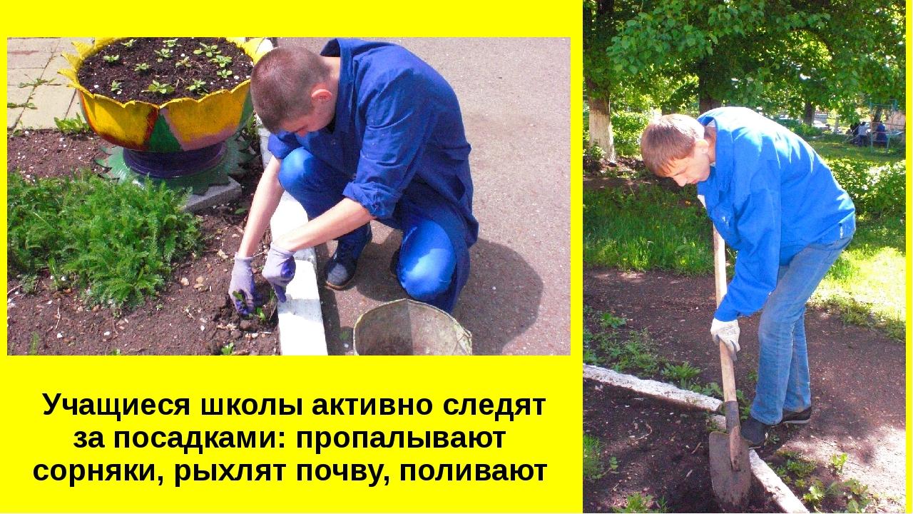 Учащиеся школы активно следят за посадками: пропалывают сорняки, рыхлят почв...