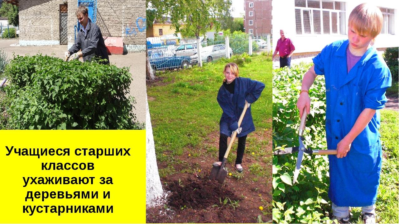 Учащиеся старших классов ухаживают за деревьями и кустарниками