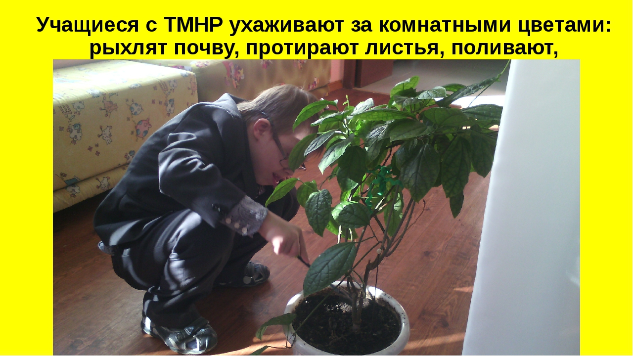 Учащиеся с ТМНР ухаживают за комнатными цветами: рыхлят почву, протирают лис...