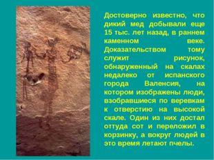 Достоверно известно, что дикий мед добывали еще 15 тыс. лет назад, в раннем к