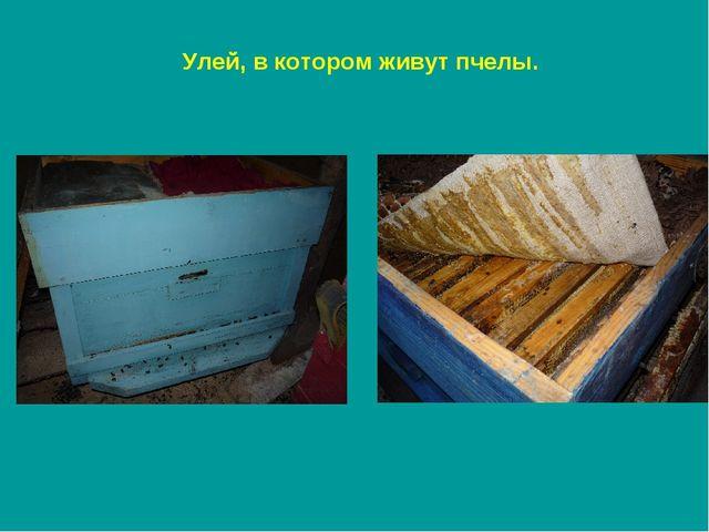 Улей, в котором живут пчелы.