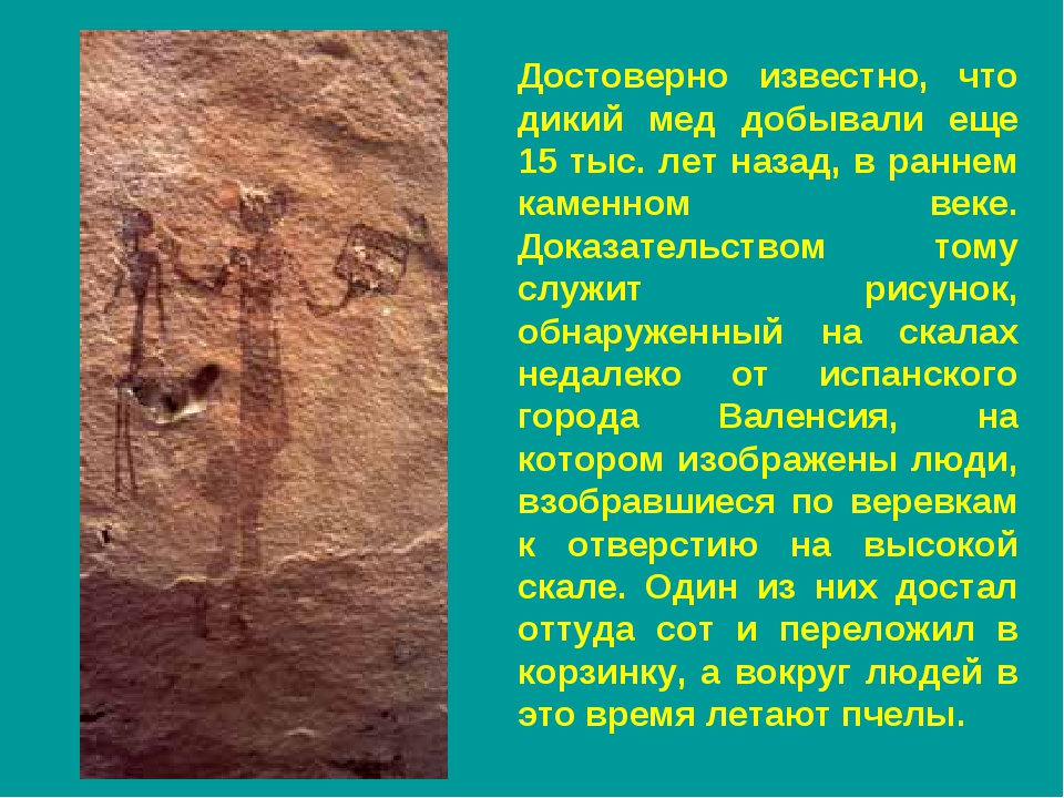 Достоверно известно, что дикий мед добывали еще 15 тыс. лет назад, в раннем к...