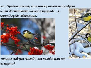 Гипотеза: Предположим, что птиц зимой не следует кормить, им достаточно корма