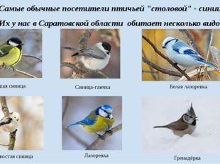 """Самые обычные посетители птичьей """"столовой"""" - синицы. Их у нас в Саратовской"""