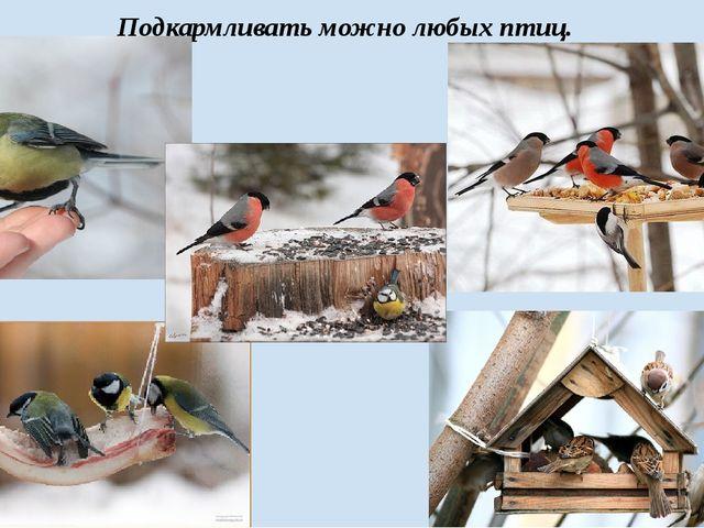 Подкармливать можно любых птиц.