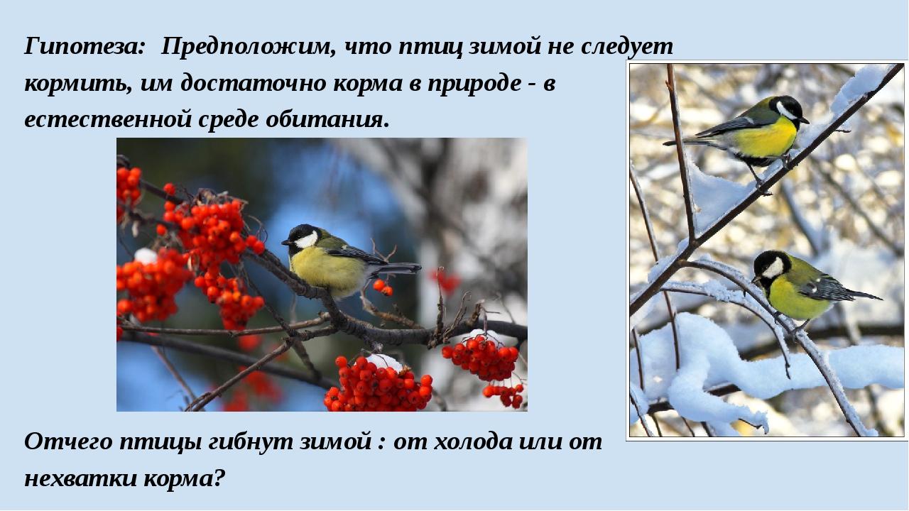 Гипотеза: Предположим, что птиц зимой не следует кормить, им достаточно корма...