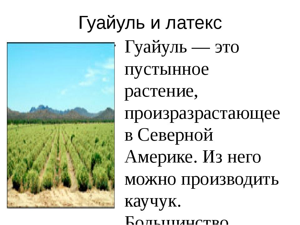 Гуайуль и латекс Гуайуль — это пустынное растение, произразрастающее в Северн...