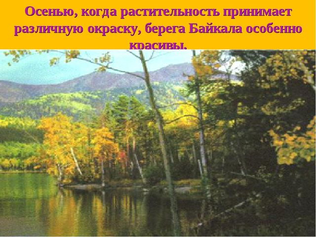 Осенью, когда растительность принимает различную окраску, берега Байкала особ...