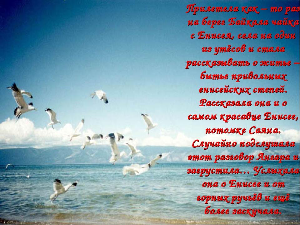 Прилетела как – то раз на берег Байкала чайка с Енисея, села на один из утёсо...