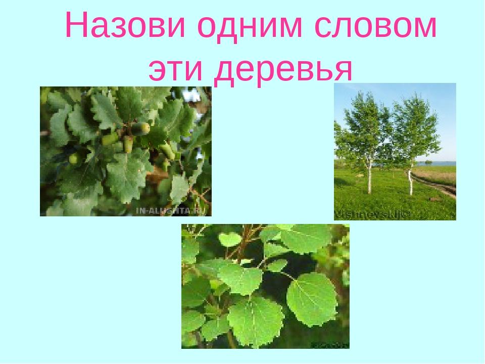 Назови одним словом эти деревья