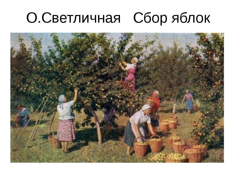 О.Светличная Сбор яблок