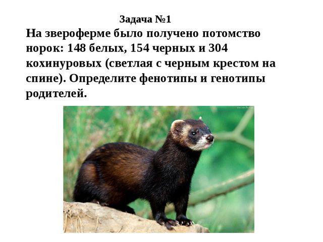 На звероферме было получено потомство норок: 148 белых, 154 черных и 304 кохи...