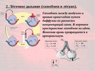 2. Лёгочное дыхание (газообмен в лёгких). Газообмен между воздухом и кровью п