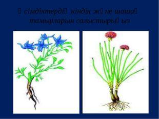 Өсімдіктердің кіндік және шашақ тамырларын салыстырыңыз