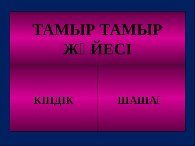 ТАМЫР ТАМЫР ЖҮЙЕСІ КІНДІК ШАШАҚ