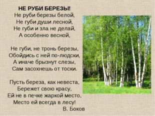 НЕ РУБИ БЕРЕЗЫ! Не руби березы белой, Не губи души лесной, Не губи и зла не д
