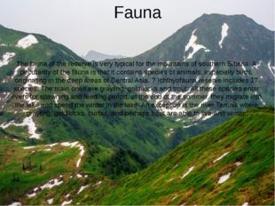 Fauna The fauna of the reserve is very typical for the mountains of southern