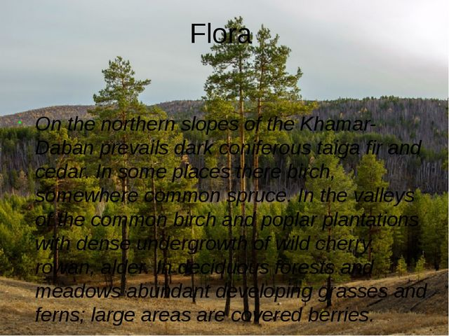 Flora On the northern slopes of the Khamar-Daban prevails dark coniferous tai...