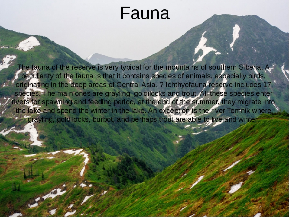 Fauna The fauna of the reserve is very typical for the mountains of southern...