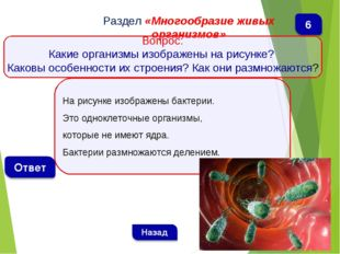 На рисунке изображены бактерии. Это одноклеточные организмы, которые не имеют
