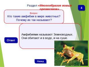 Амфибиями называют Земноводных. Они обитают и в воде, и на суше. Раздел «Мног