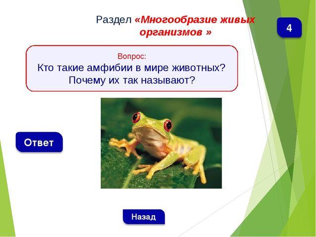 Раздел «Многообразие живых организмов » Вопрос: Кто такие амфибии в мире живо...
