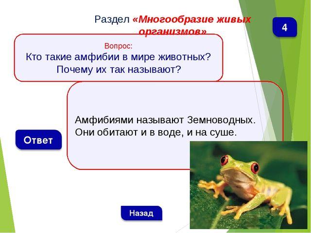 Амфибиями называют Земноводных. Они обитают и в воде, и на суше. Раздел «Мног...