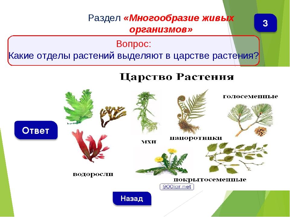 Раздел «Многообразие живых организмов» Вопрос: Какие отделы растений выделяю...