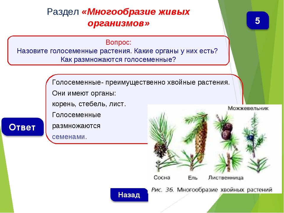 Голосеменные- преимущественно хвойные растения. Они имеют органы: корень, сте...