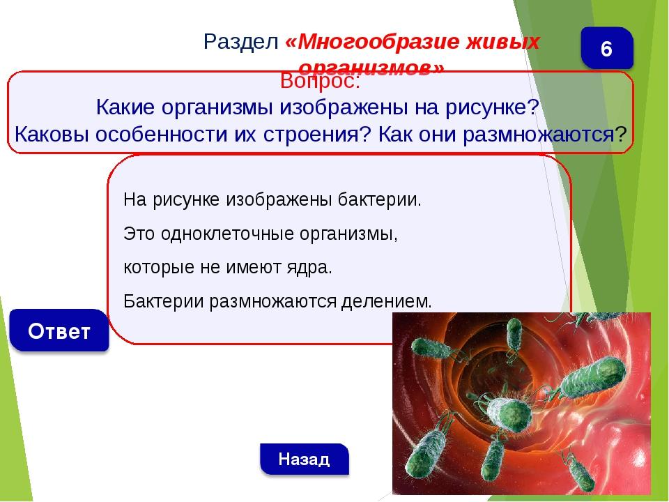 На рисунке изображены бактерии. Это одноклеточные организмы, которые не имеют...
