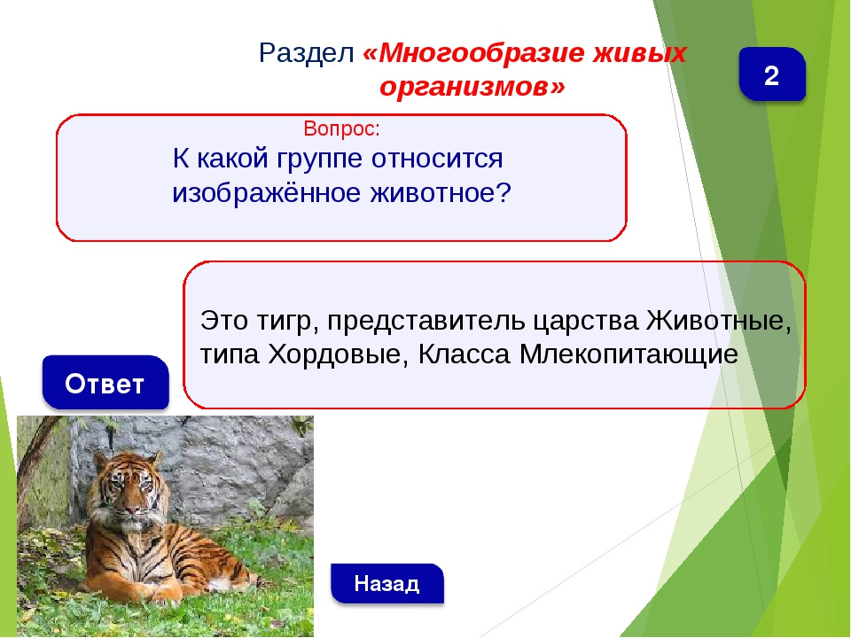 Это тигр, представитель царства Животные, типа Хордовые, Класса Млекопитающие...