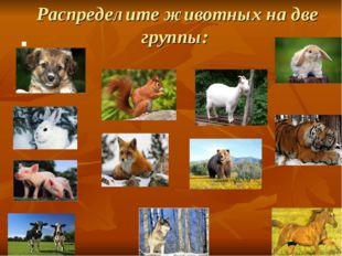 Распределите животных на две группы: