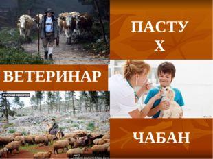 ПАСТУХ ЧАБАН ВЕТЕРИНАР